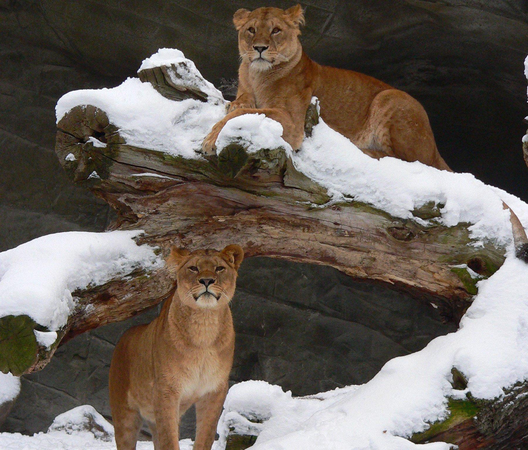 Hagenbecks Tierpark öffnungszeiten