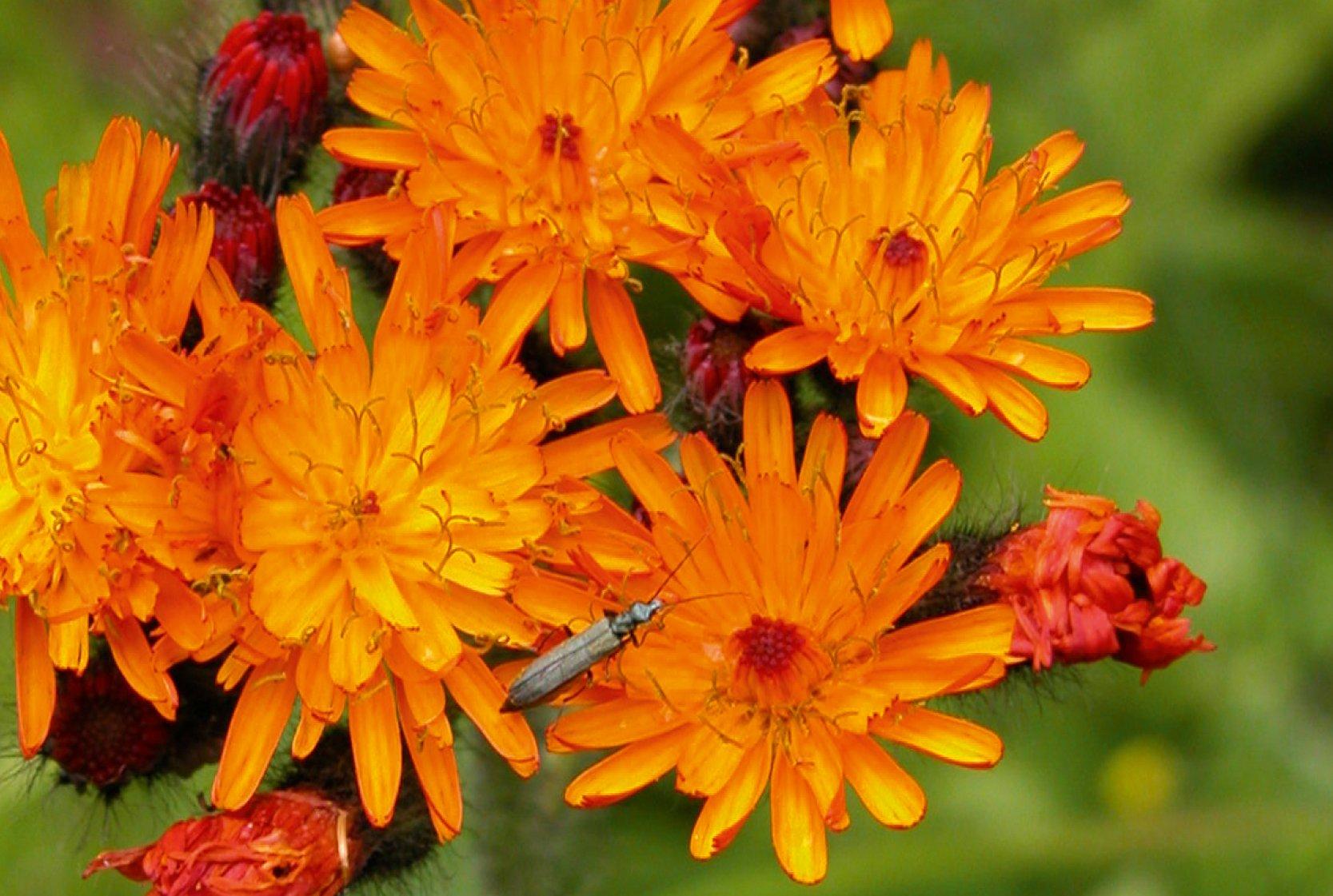 Dein Botanischer Garten und Start in den Frühling