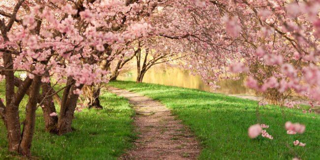Das Baumblütenfest in Werder ist ein Spektakel der besonderen Art