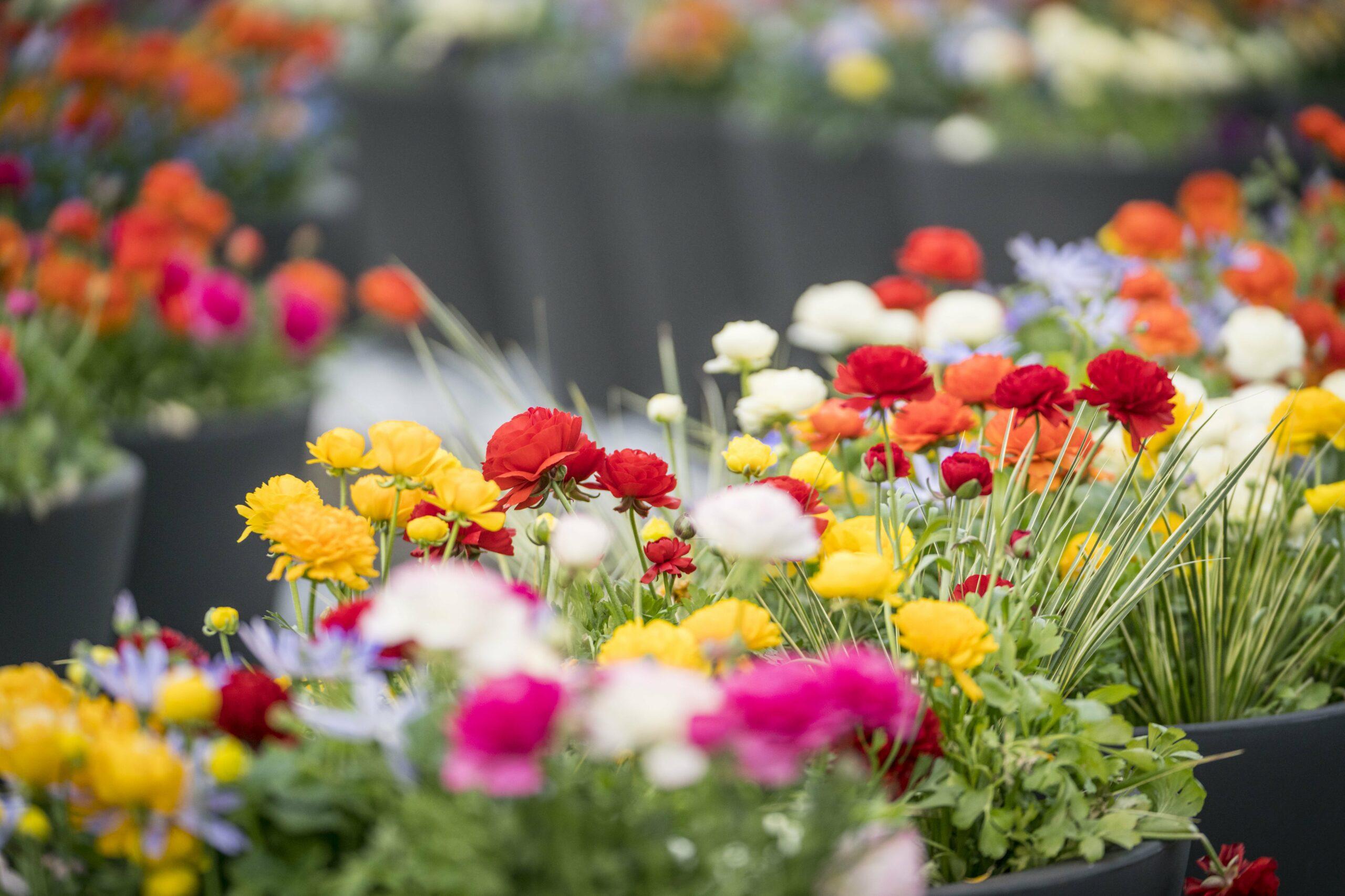 Die internationale Gartenausstellung IGA in Berlin